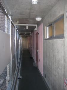 Sakura Hallway