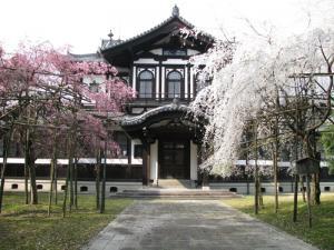 Old Sakura